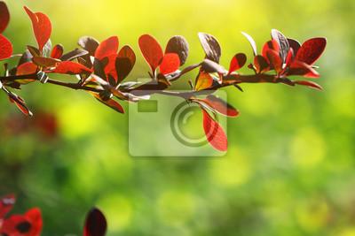 Obraz gałąź drzewa z czerwonymi liśćmi