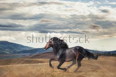 Obraz Galloping horse