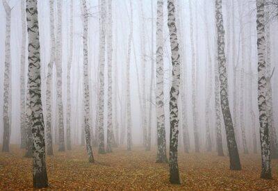 Obraz Głęboko bzdura jesienią brzozowy las