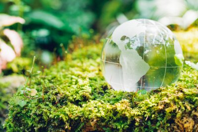 Obraz Globe glass in grass forest on nature background, Environment Day Concept