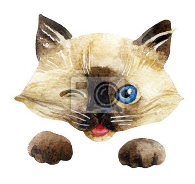 Głowica Kitten i łapy.