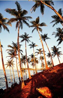 Golden sunrise on a tropical island, Sri Lanka.