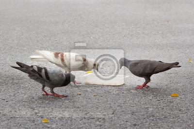 Gołębie jedzenia na drodze