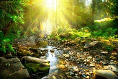 Obraz Górskie rzeki. Spokojnym dekoracje w środku zielonego lasu