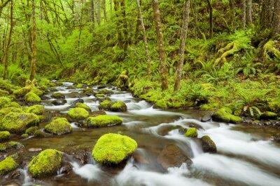 Obraz Gorton Creek przez bujne lasy deszczowe, Columbia River Gorge, USA