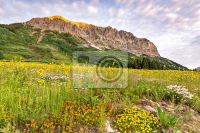 Gothic Mountain Flowerland