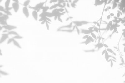 Obraz Gray shadow of the leaves on a white wall. Abstract neutral nature concept background. Space for text.
