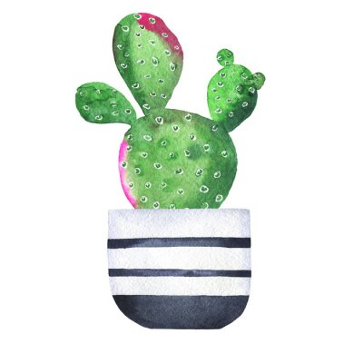 Obraz Green and pink cactus in a flowerpot isolated on white background. Hand drawn watercolor illustration.