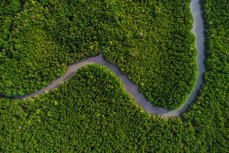Obraz Green mangrove forest sea bay sunrise ecology nature system aerial view