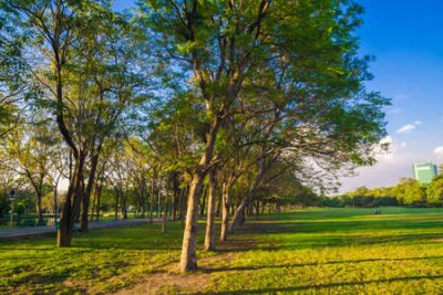 Obraz Green tree park sunset foliage meadow with blue sky cloud nature landscape