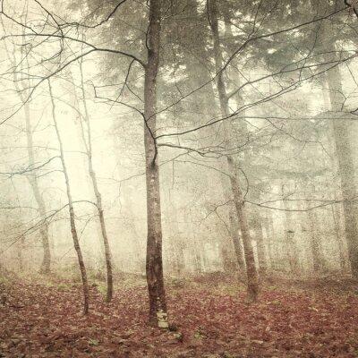 Obraz Grunge mistyczny las