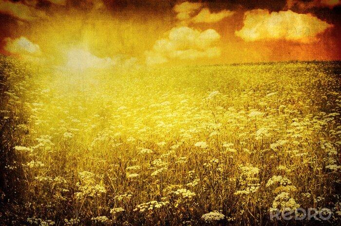 Obraz grunge obrazu pole zielone i niebieskie niebo