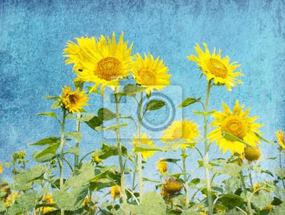 grunge papieru z słoneczniki na tle błękitnego nieba