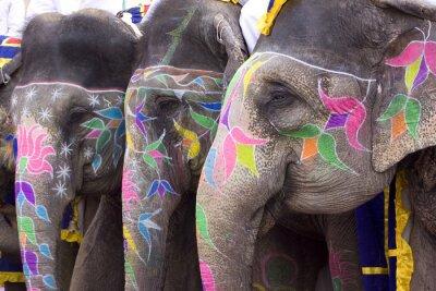 Obraz grupa słoni