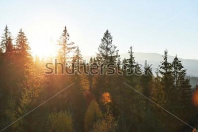 Obraz Halny jesień krajobraz z kolorowym lasem. Dramatyczna scena rano, czerwone i żółte liście jesienią. Lokalizacja miejsce Karpaty, Ukraina, Europa.
