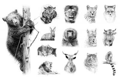 Obraz Hand drawn set of 14 animals, sketch graphics monochrome illustration on white background