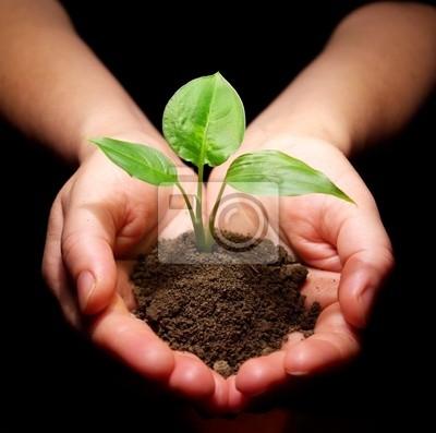 Hands gospodarstwa drzewko w glebie