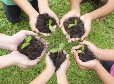Obraz Hands gospodarstwa drzewko w powierzchnię gleby