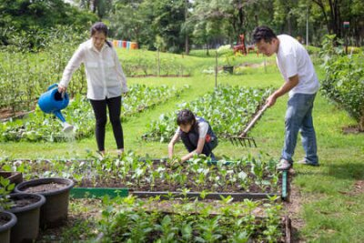 Obraz Happy asian family,parents help,care,daughter to grow vegetables in farm,father working using rake in organic garden,mother watering plants with watering can,vegetables gardening,agriculture,activites