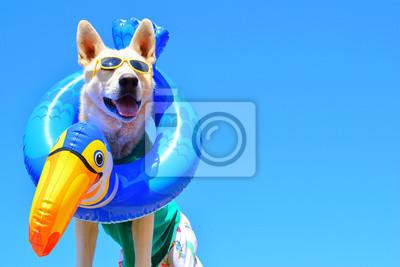 Obraz happy dog with sunglasses