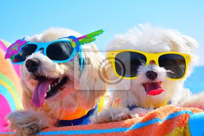 Obraz happy dogs with sunglasses