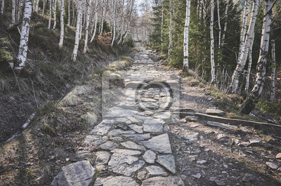 Hiking stone path in a mountain forest, color toning applied, Karkonosze National Park, Karpacz, Poland.