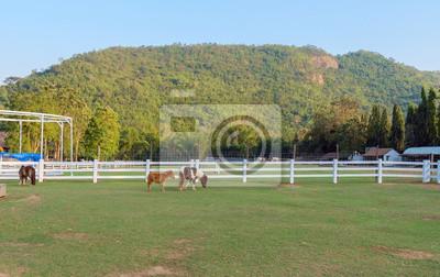 Hodowla / Widok zwierząt. Dwarf koń w dziedzinie ogrodzenia z górskich tle.