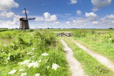 Obraz Holenderski wiatrak w świeżym zielonym polu w lecie