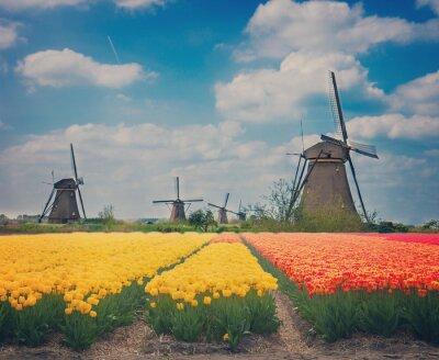 Obraz holenderskie wiatraki nad tulipanów