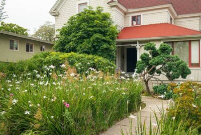 Obraz Home garden with wildflower planting and native flowers