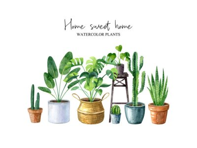 Obraz Home sweet home-watercolor illustration with home plants (monstera, cactus, sansevieria) isolated on white background. Composition in hygge style. Scandinavian interior. Boho lifestyle.