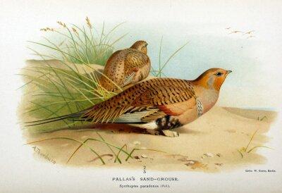 Obraz Illustration of a bird.