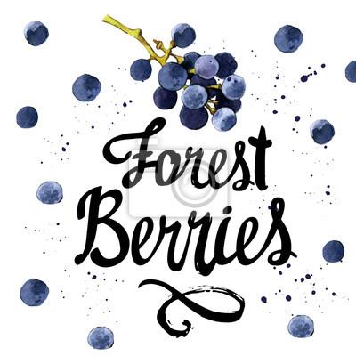 Ilustracja akwarela z dzikich winogron.