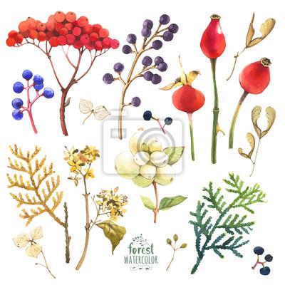Ilustracja akwarela z gałęzi, liści i owoców.