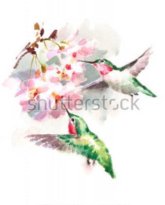Obraz Ilustracja lato ogród na białym tle. Ilustracja lato ogród na białym tle