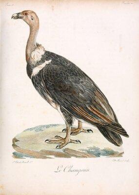 Obraz Ilustracja ptaka.