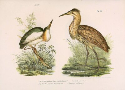 Obraz Ilustracja ptaków.