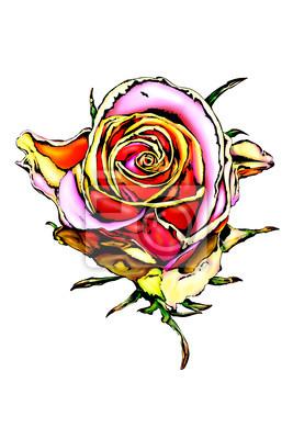 Ilustracja róży kwiat kolorowy rysunek sztuka