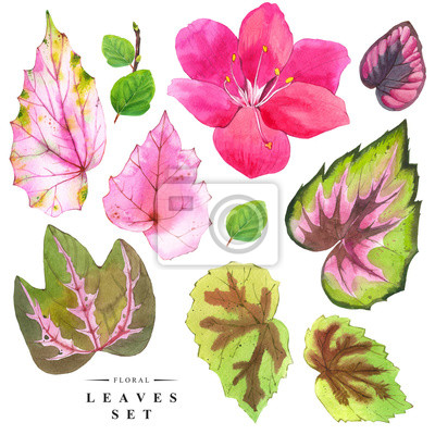 Ilustracje z roślinami z realistycznymi tropikalnych kwiatów i liści.