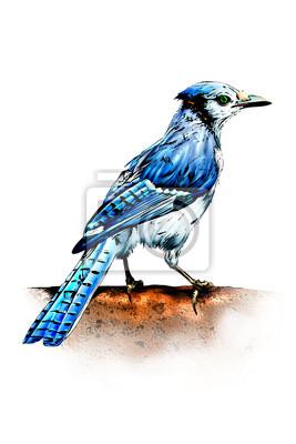 ilustracji ptaków szczęśliwy Bluebird