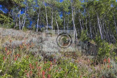 Indyjski Pędzel i drzewa Aspen