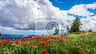 9abeec2fedd181 Obraz Indyjski pędzlem i Aster Kwiaty w High Alpine Tod Mountain w Sushwap  Highlands i część. 100cm