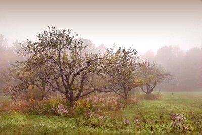 Obraz jabłka drzewa w mgle