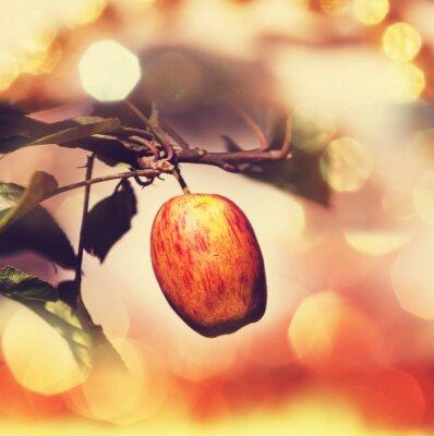Obraz jabłko