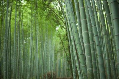 Obraz Japoński las bambusowy, Kioto
