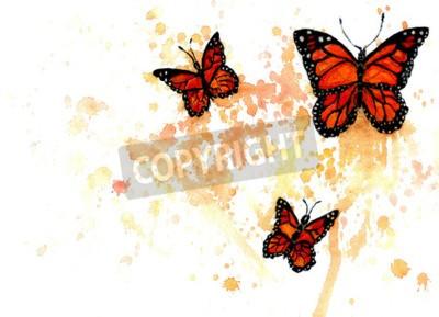 Obraz Jasne pomarańczowe motyle monarcha malowane akwarelą.