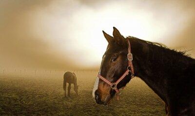 Obraz jazda we mgle