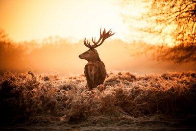 Obraz Jeleń w rannym słońcu.