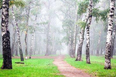 Obraz Jesień głęboka mgła w porannym brzozowym gaju