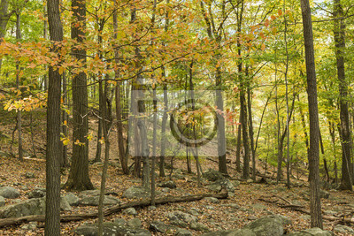 Jesień na Bear Mountain Trail